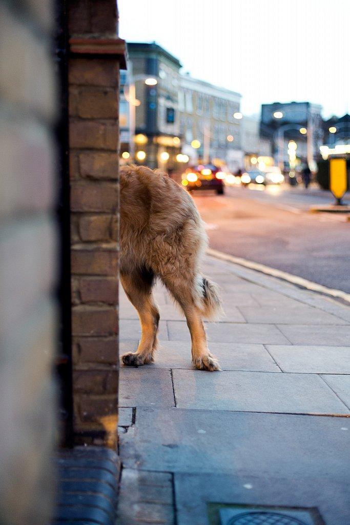 Semidog