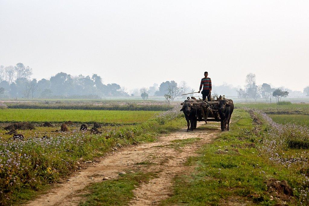 Nepal-2018-H8A7625-202.jpg