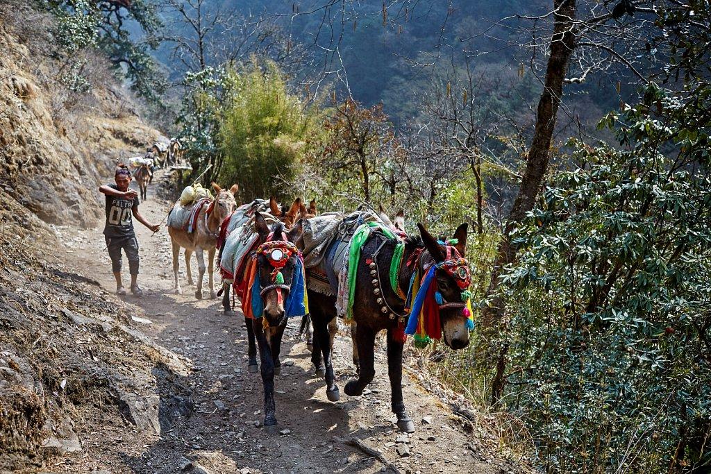 Nepal-2018-H8A9660-525.jpg